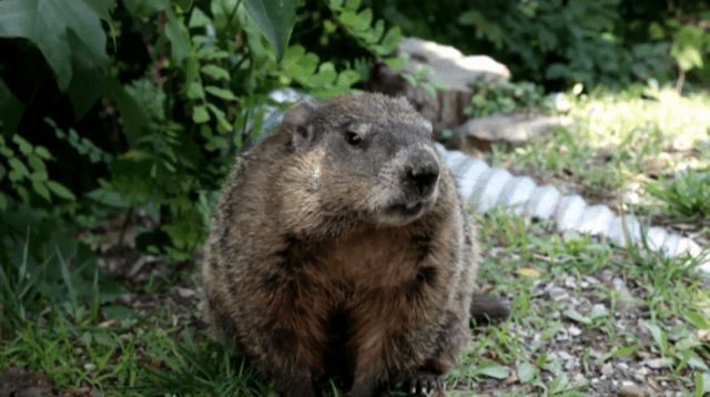 Triple-I/Milliman Groundhog Day Report Projects Insurer Growth, Profits In 2021