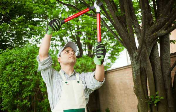 How to Prevent Tree Damage to Homes